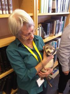 Val, one of our volunteers, with a ferret from Prospect Ferret Rescue.